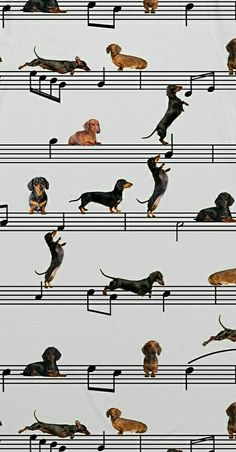The Diverse Dachshund Breed - Champion Dogs Dachshund Breed, Dachshund Funny, Mini Dachshund, Christmas Dachshund, Puppies Near Me, Dogs And Puppies, Sausage Dog Puppy, Sausage Dogs, Dashund