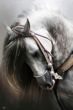 Dappled Grey Horse   Gray Horse  From the Facebook page:   999,999,999 People