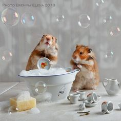 dishwashing by Elena Eremina on 500px