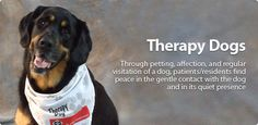 Therapy Dog - #St._John_Ambulance, Canada.  The program started in June 1992 as a pilot program in Peterborough, Ontario and today reaches thousands of people on a regular basis throughout Canada. It was introduced to Nova Scotia in March, 1999 and to Prince Edward Island in 2000.