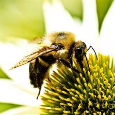 Nature Hard Bee On Flower iPad Air wallpaper
