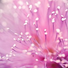 botanical photography pink abstract floral 8x8 by mylittlepixels, $23.00