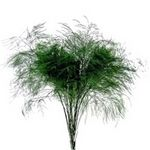 TREE FERN (25)
