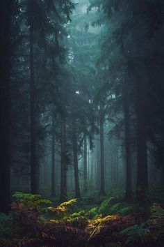 39 New Ideas For Fantasy Landscape Photography Magical Forest Misty Forest, Magic Forest, Tree Forest, Dark Forest, Beautiful Forest, Beautiful Places, Beautiful Pictures, Landscape Photography, Amazing Nature