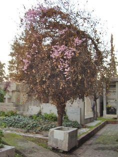 El árbol de los espíritus... : Cementerio General, Santiago de Chile | virtual_death