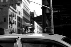 On the Street…..Grand St., New York « The Sartorialist