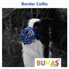 #BUMAS #dogmuzzle #Bordercollie Every Dog Breed, Dog Muzzle, Border Collie, Dog Breeds, Dogs, Animals, Animais, Animales, Animaux