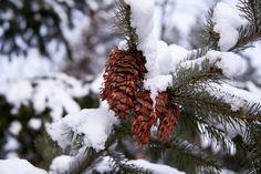 Snow cones.