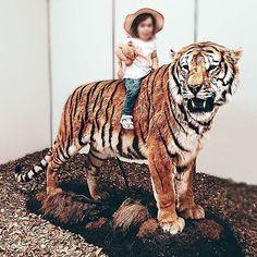 🐯 In jedem von uns steckt ein Tiger, der sich zeigt, sobald es etwas zu kämpfen gibt.🐯 Tiger, Animals, Instagram, Animaux, Animal, Animales, Animais
