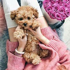 Awww! Queremos un perrito así de esponjoso  #doglovers