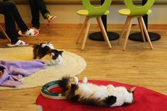 The cat cafe in Seoul - where you can have a cup of tea with 50 cats. --> Need to go there!