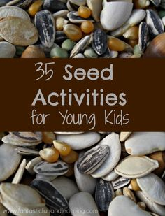 35 Seed Activities for Young Kids. Preschool and kindergarten seed theme ideas for spring science. Nature Activities, Spring Activities, Science Activities, Seed Activities For Preschool, Seed Crafts For Kids, Kid Science, Science Crafts, Creative Activities, Creative Play