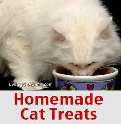 Homemade Cat Treats Recipe - Just 5 ingredients you already have at home!
