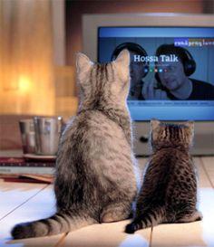 bibeltagebuch: Was ist Hossa-Talk wirklich? Katzenjammer?-Pelagia...