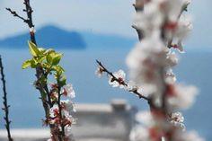 La primavera sboccia profumata sul mare