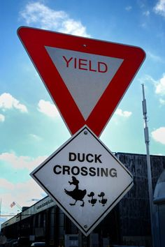 Duck Crossing in NYC
