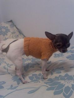 This pattern is based off of Darby's original cable sweater, but has been sized up to fit a 5 lb dog. This revision has not been tested, but it is just my 5 lb dog sweater pattern with a cab… Knitted Dog Sweater Pattern, Dog Coat Pattern, Knit Dog Sweater, Knitted Cat, Cable Sweater, Crochet Pattern, Small Dog Coats, Small Dog Sweaters, Cat Sweaters