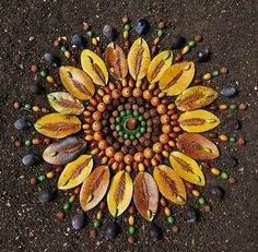 Simetría. Nature mandala!