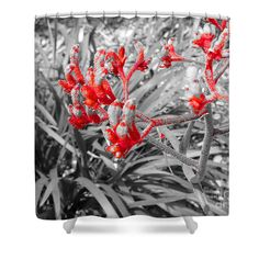 Australian kangaroo paws in red, black and white shower curtain by Tracey Lee Art Designs