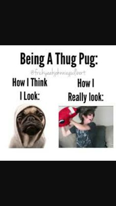 I'm a Thug Pug and always will be love you Johnnie Guilbert ❤️❤️❤️❤️❤️