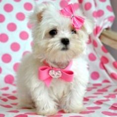 Yes, ma'am! <3 I'll take a dozen of those white ones with the pink bows! <3