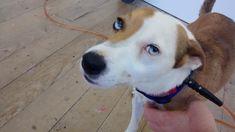 I met a dog with sectoral heterochromia http://ift.tt/2lKRp6R