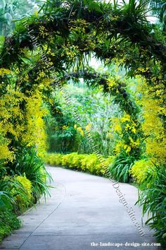 A simple tropical garden arbor made from a metal framework and covered with tropical plants, vines, and flowers.