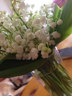 Lilly of the Valley ...