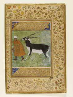 1616. Indian Black Buck led by a handler. Signed by artist 'Manohar slave of Jahangir'. Mughal, India.