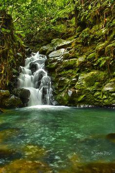 UNESCO World Heritage Site: Coco's Island, COSTA RICA. (Uninhabited; best scuba in the world!)