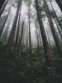 Woods   VSCO   brperry