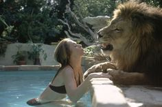Tippi Hedren and Melanie Griffith's pet, Neil the lion,Mel squirting water into neils mouth, Mel in bed with him out in the pool swimming with neil