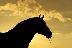 Horizon paard