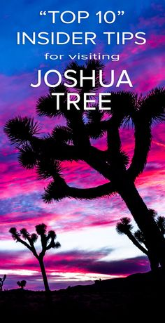 "Top 10 Insider Tips for Visiting Joshua Tree -- I live/Work in Joshua Tree, so I thought I'd put together a few ""insider tips"" to help you plan your next trip to Joshua Tree."