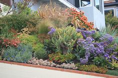 Front garden slope adjacent driveway | Aloes in this photo i… | Flickr