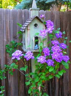 Lovely Clematis vines on a rustic birdhouse chapel.