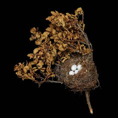 Unique pieces of Art - Bird`s Nest a Natural Architecture (7)