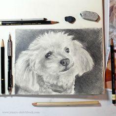 Pet Portrait in progress, by Jennifer Frith