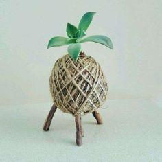 Unique Kokedama Ball Ideas for Hanging Garden Plants Indoor Garden, Garden Plants, Indoor Plants, House Plants, Moss Garden, Hanging Succulents, Cacti And Succulents, Hanging Plants, Plant Crafts