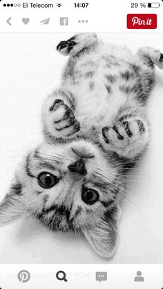 Chat mignon en noir et blanc