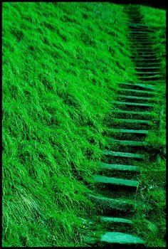 Lush green stairway