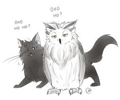 Image result for owls/bokuto