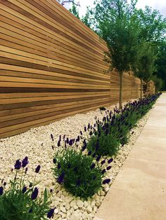 Hardwood slatted horizontal privacy screen trellis fence with lavender olives roses and cream travertine paving Back Garden Design, Modern Garden Design, Fence Design, Landscape Design, Garden Fencing Uk, Garden Hedges, Front Garden Ideas Driveway, Driveway Fence, Fence Ideas