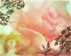 Fresh Flowers  Rose  8x10 print by Emmalynne on Etsy, $20.00