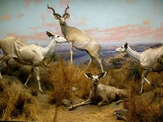 Diorama at Natural History Museum of Los Angeles County (featured on the cover of Interpol album 'Our Love to Admire').