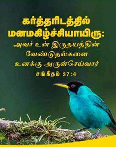Parrot, Bible Verses, Bird, Animals, Parrot Bird, Animales, Animaux, Birds, Animal