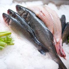 Im Coco Grill und Bar steht frischer Fisch im Mittelpunkt | creme zürich