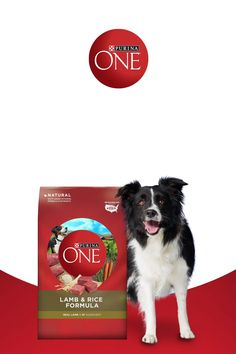 Feed your dog Purina ONEand you could seea visibly healthy dogin 28 days or less. From healthy energyandashiny coat to bright eyesandstrong, healthy teeth and gums, join over 1.2 MILLION others who have accepted the Challenge to see a difference in their pet.Purina ONE dog food is made with natural, high-quality ingredients with added vitamins, minerals & nutrients.Every formula is made with 0% fillers&real meat that keepshim coming back, meal after meal