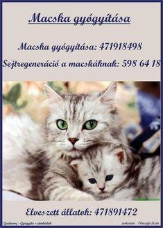 Elves, Cats, Animals, Gatos, Animales, Animaux, Animal, Cat, Animais