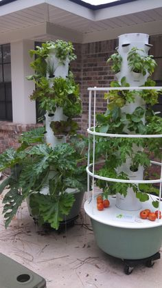 Future Growing Tower Gardens At University Of Mississippi Food Pinterest Garden And
